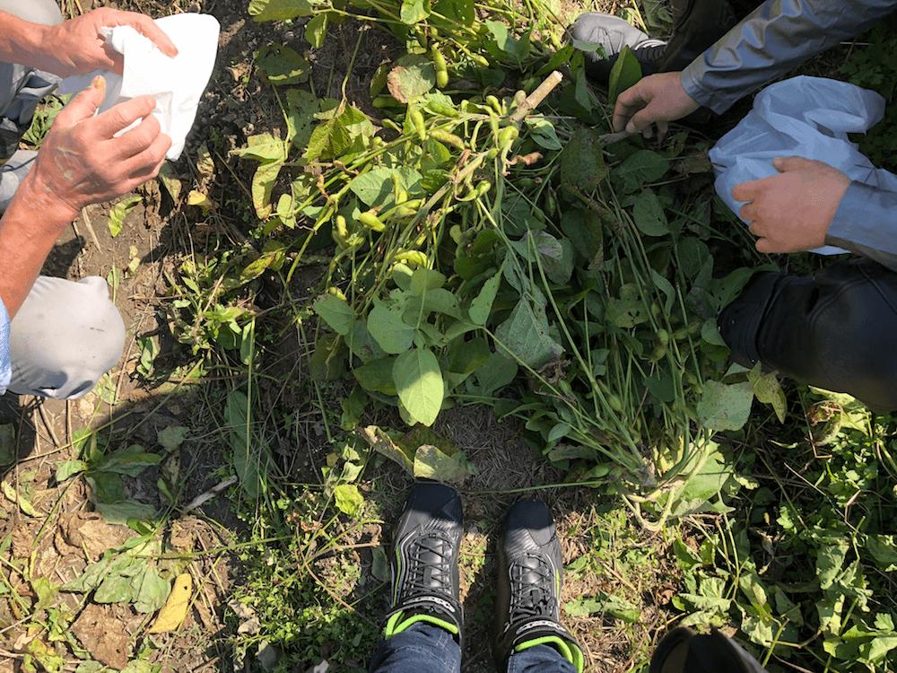 10月秋のツーリング@丹波篠山の黒枝豆を狩りに行く_8