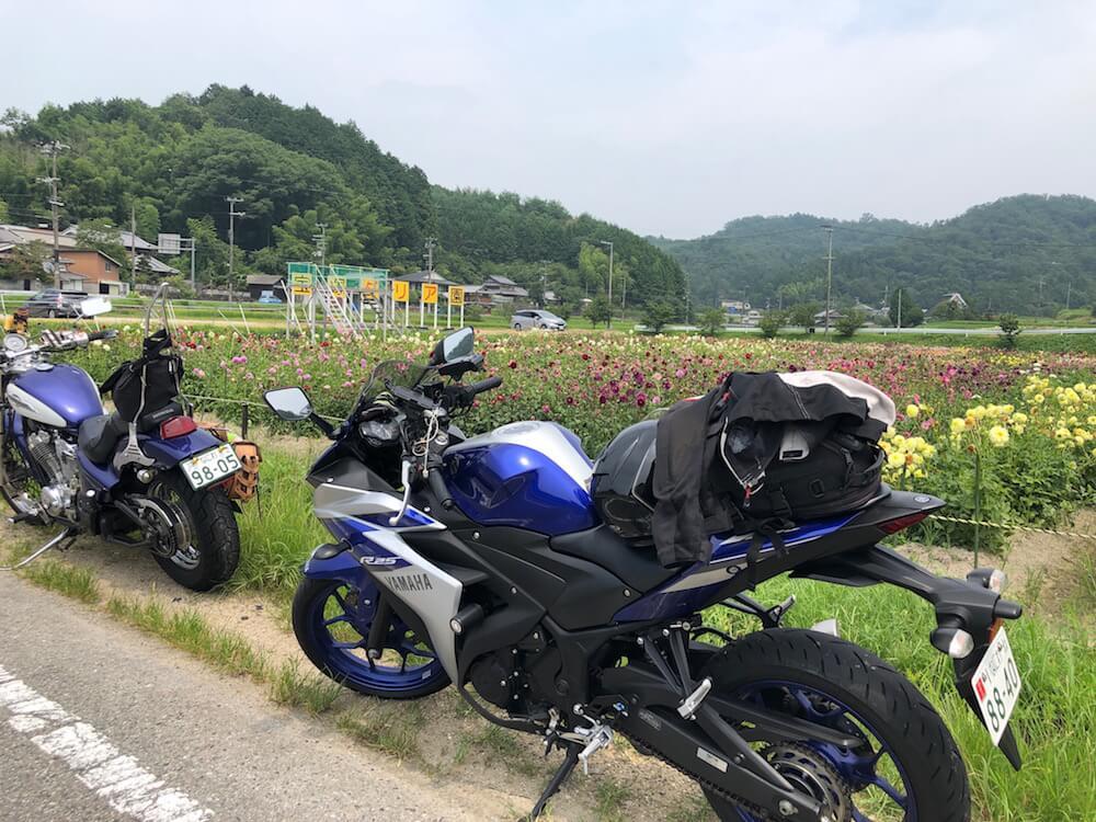 宝塚 ダリア花つみ園 ツーリング